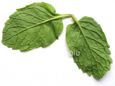 ist2_632100-back-of-two-mint-leaves
